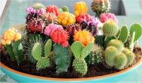 cactus surprise maken
