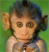 aap surprise maken