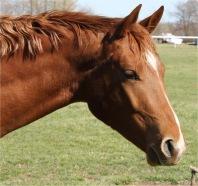paard surprise maken